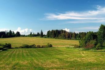 Коттеджные поселки занимают 0.1% от общего количества продающихся в Ленобласти земель